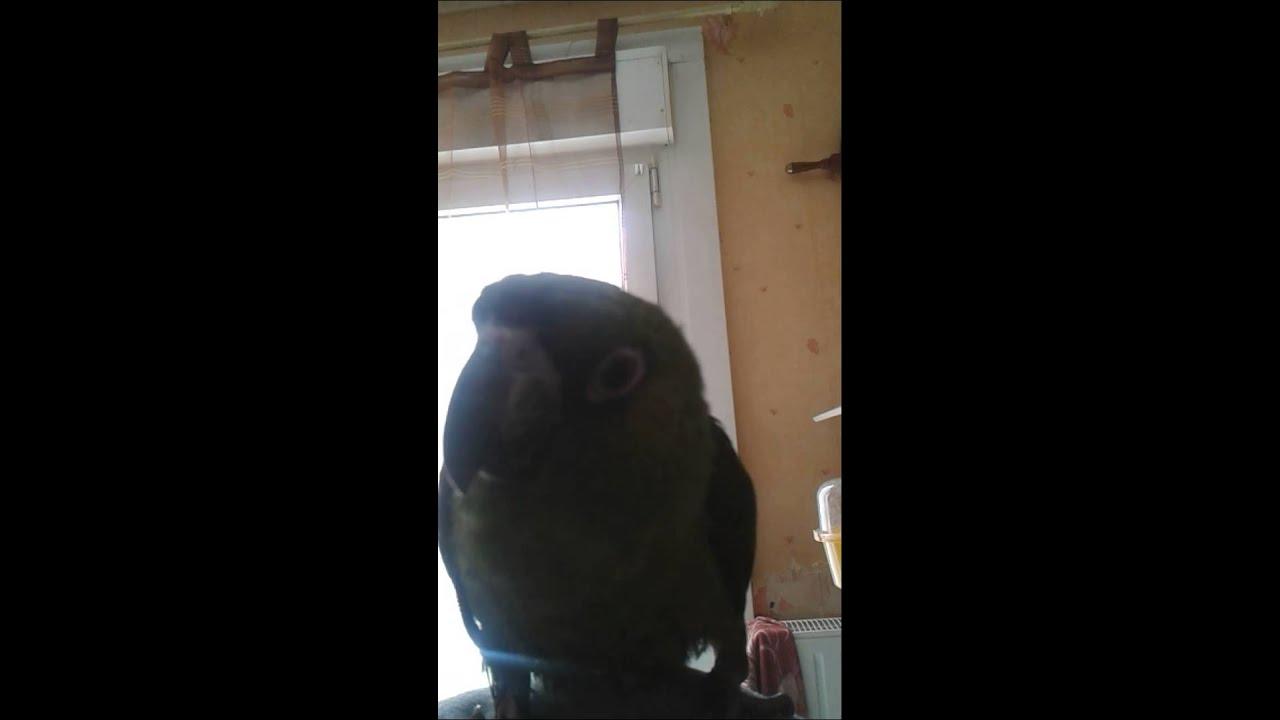 Paco, Perroquet Jardine - à Perroquet Jardine