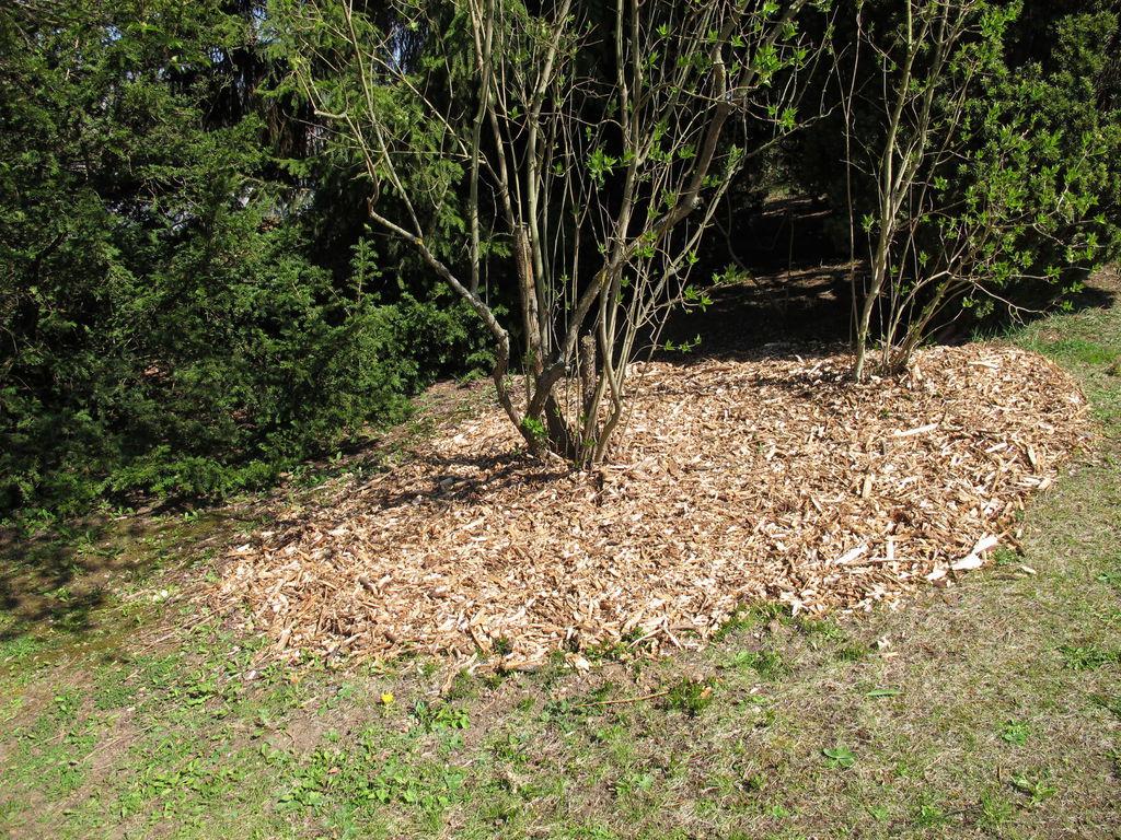 Paillage Au Bois : Caractéristiques Et Prix - Ooreka concernant Copeaux De Bois Jardin Pas Cher