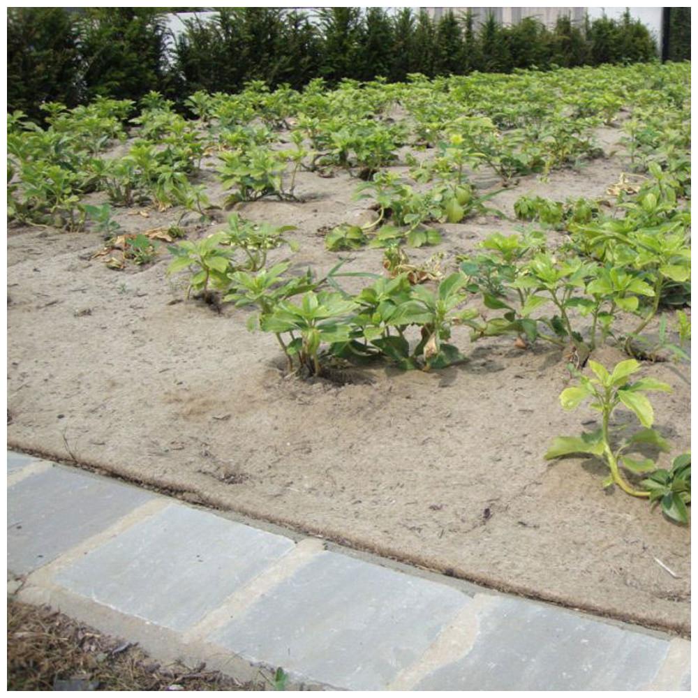 Paillage Biodégradable Jute & Sisal 1000Gr/m2 Rouleau De 25M concernant Rouleau Toile De Jute Jardin