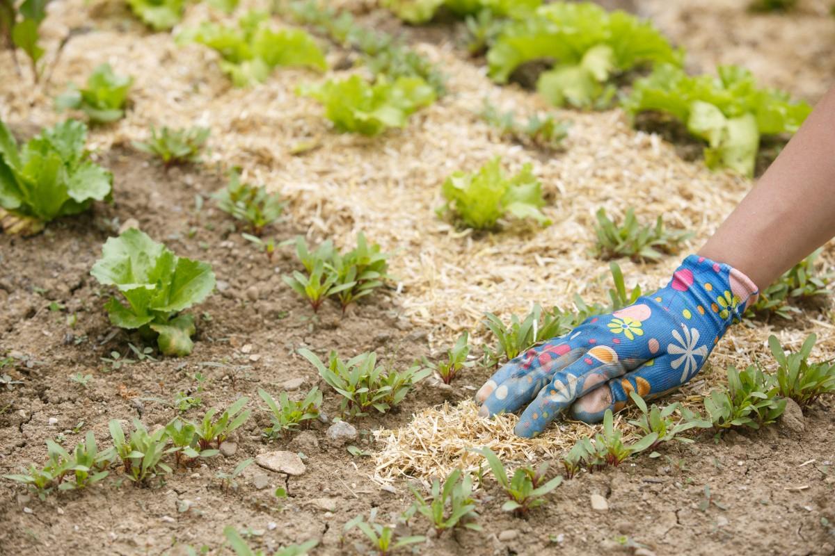 Paillage Jardin : Quel Paillis Choisir Pour Quelle Plante ? concernant Prix Copeaux De Bois Jardin