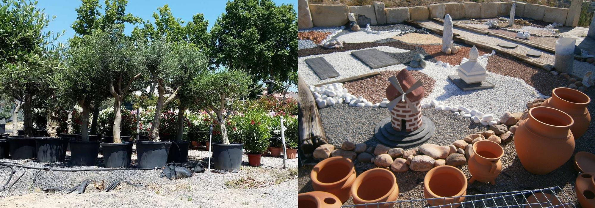 Palmiers Pézenas Et Oliviers Centenaires, De La Terre À La ... pour Cailloux Décoration Jardin