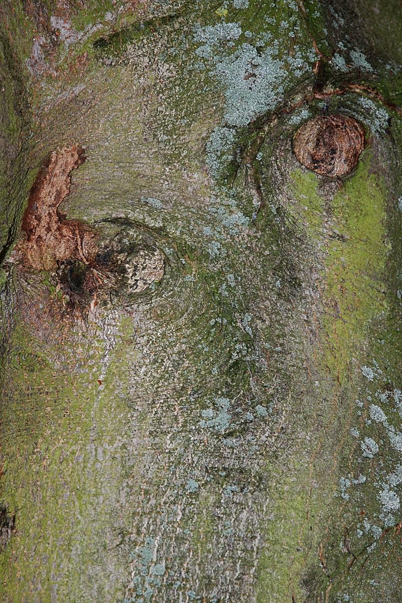 Peaux D'arbres » Paris Côté Jardin destiné Ecorce De Jardin