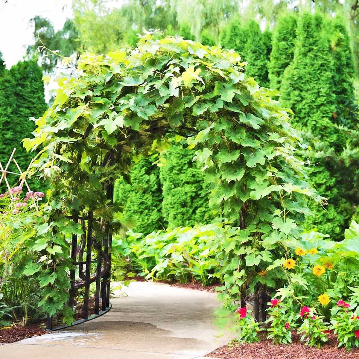 Pergola, Tonnelle Et Arche De Jardin | Jardins-Animes tout Arche De Jardin En Fer Forgé