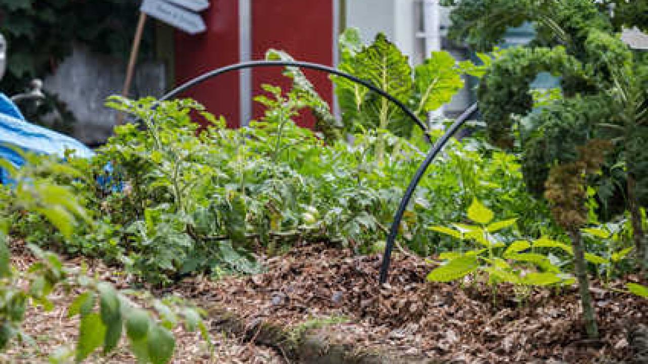 Permaculture : Définition Et Grands Principes destiné Arbre Pour Petit Jardin