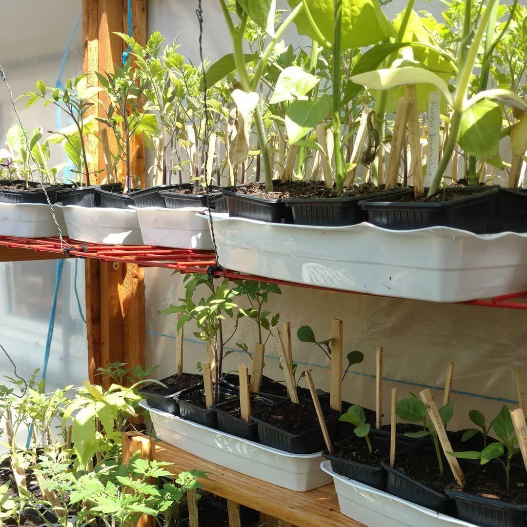Permaculture, Une Nouvelle Façon De Jardiner, Écologie ... destiné Faire Un Jardin Pour Les Nuls