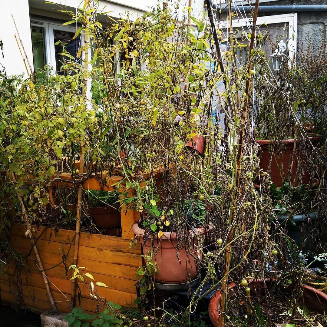 Permaculture, Une Nouvelle Façon De Jardiner, Écologie ... destiné Le Jardin Pour Les Nuls