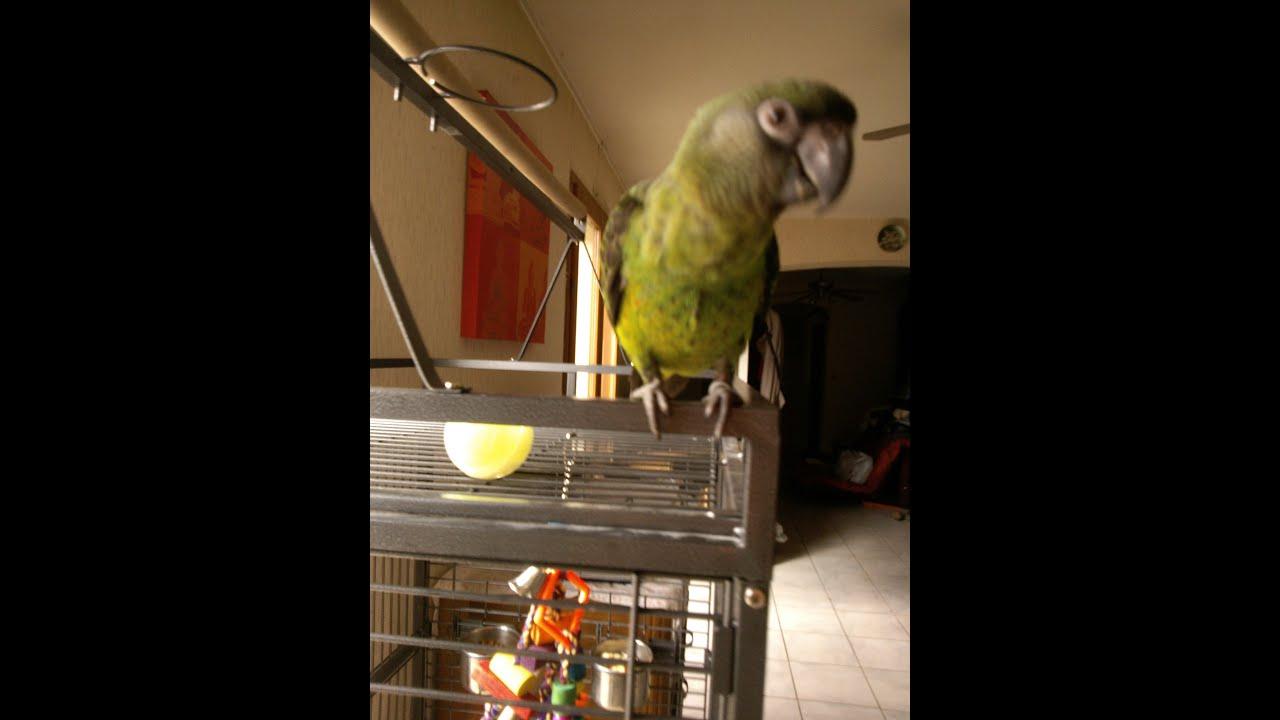 Perroquet Jardine - avec Perroquet Jardine