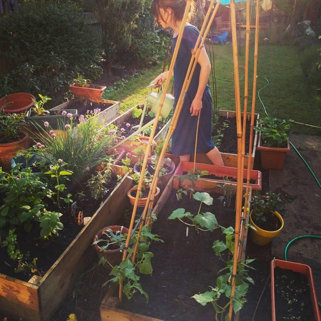 Petit Guide Du Potager Pour Les Nuls: Quoi Planter | Potager ... dedans Le Jardin Pour Les Nuls