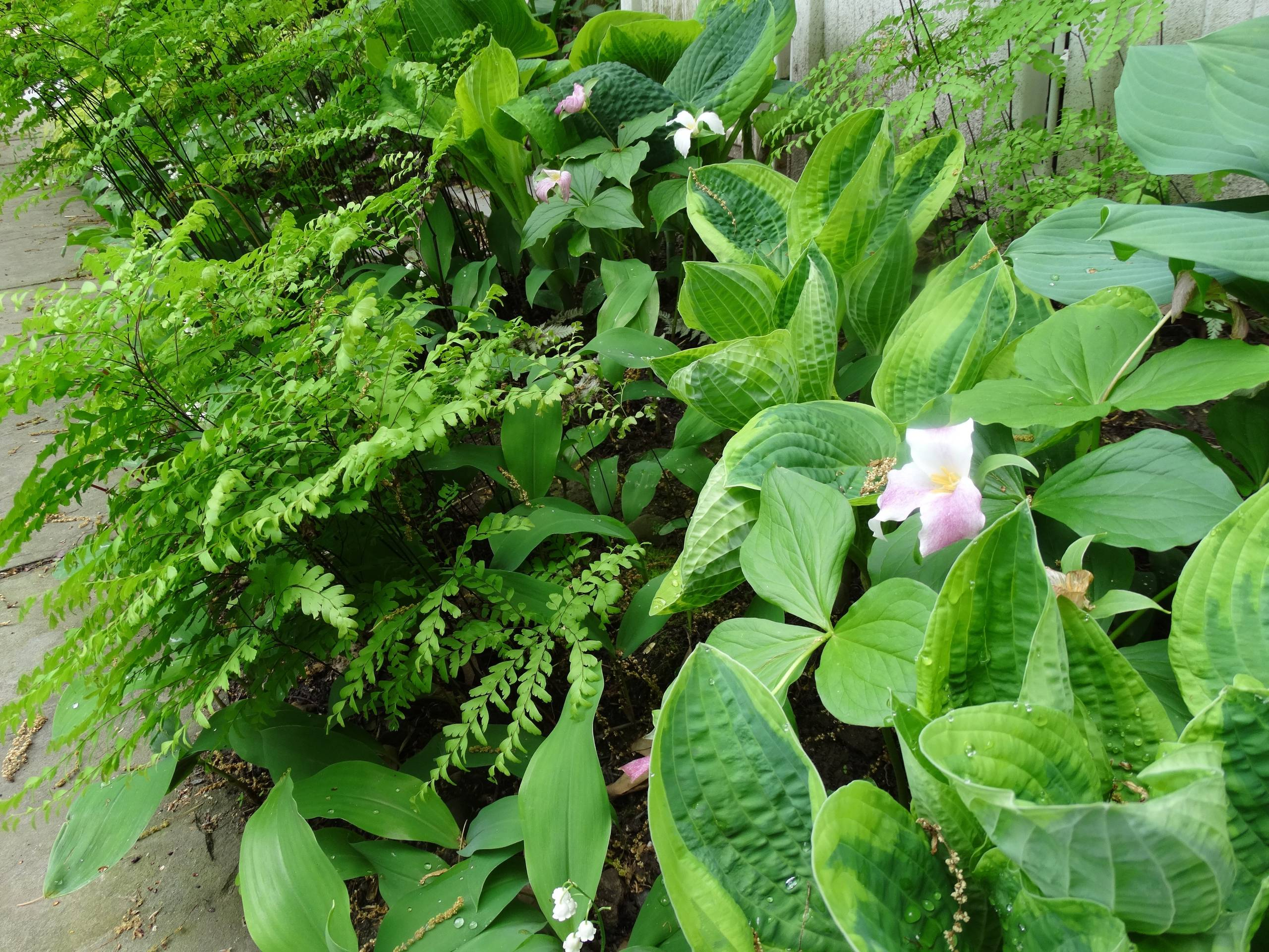 Petit Jardin Moderne : Photos Et Idées Déco De Jardins pour Ustensile De Jardin