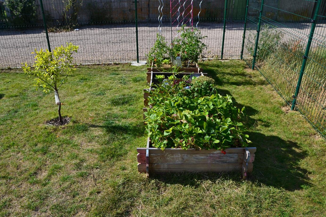Petit Jardin Mosellan By Caro: Ca Se Bouscule Au Potager ! avec Jardin En Carre