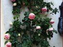 Pierre De Ronsard En Fleur... | Garden Design, Cool Plants ... dedans Salon De Jardin En Pierre