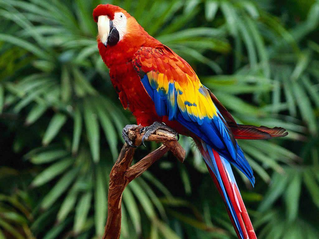 Pin By Plus Size On Birds / Ptice | Photo Perroquet ... intérieur Perroquet Jardine