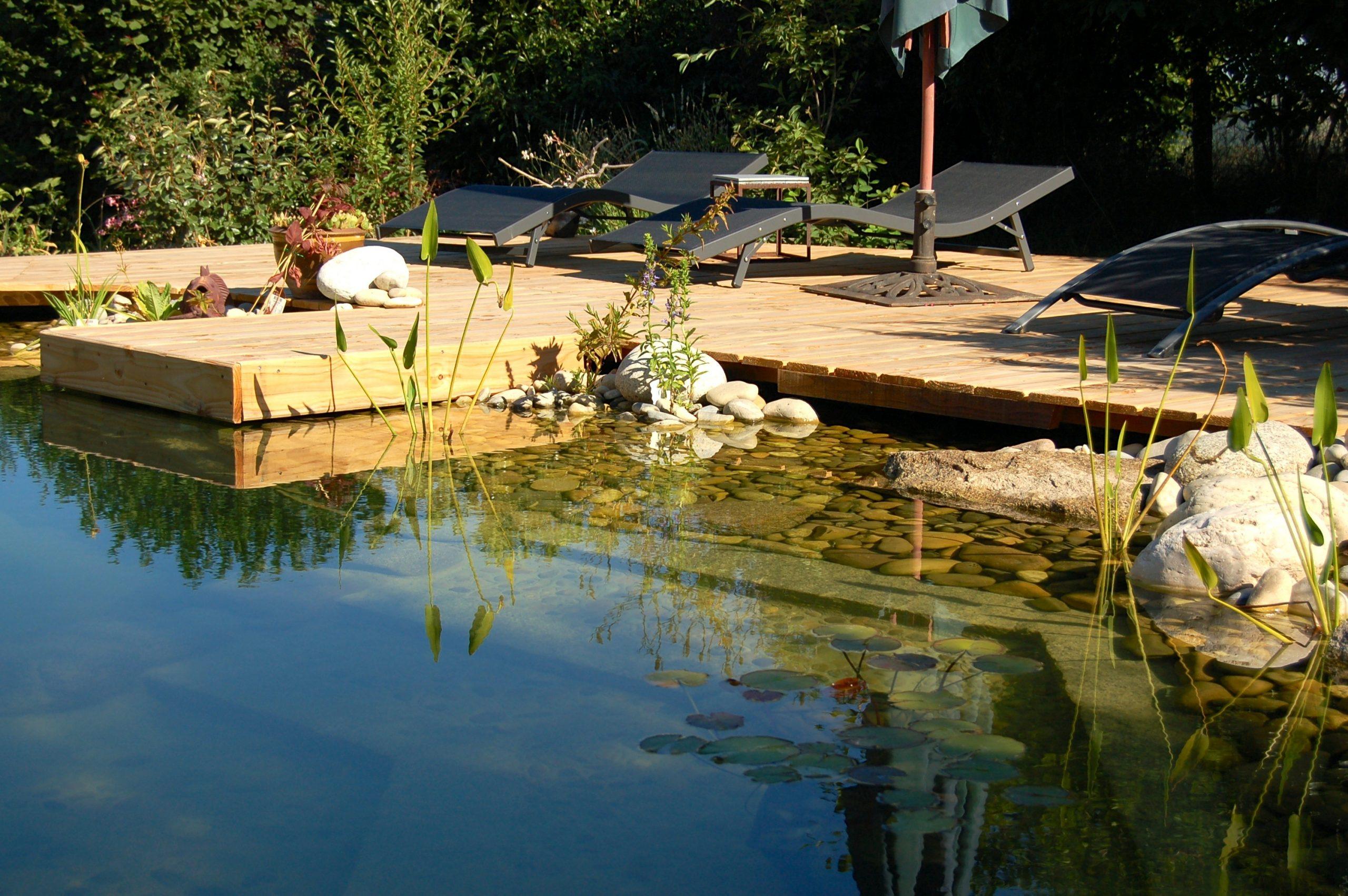 Piscine Naturelle : Principe Et Prix encequiconcerne Prix D Un Bassin De Jardin