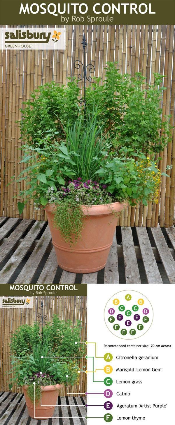 Plant Anti-Moustique | Idées Jardin, Jardins Et Jardinage à Anti Moustique Jardin