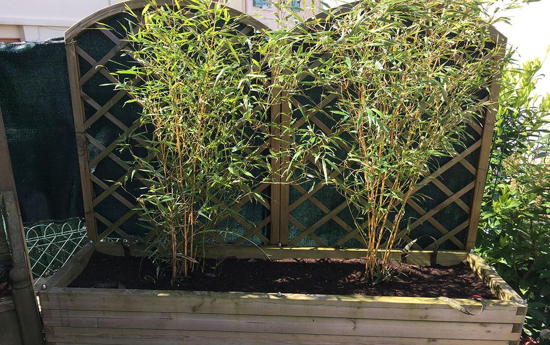 Planter Des Bambous concernant Comment Eliminer Les Bambous Dans Un Jardin