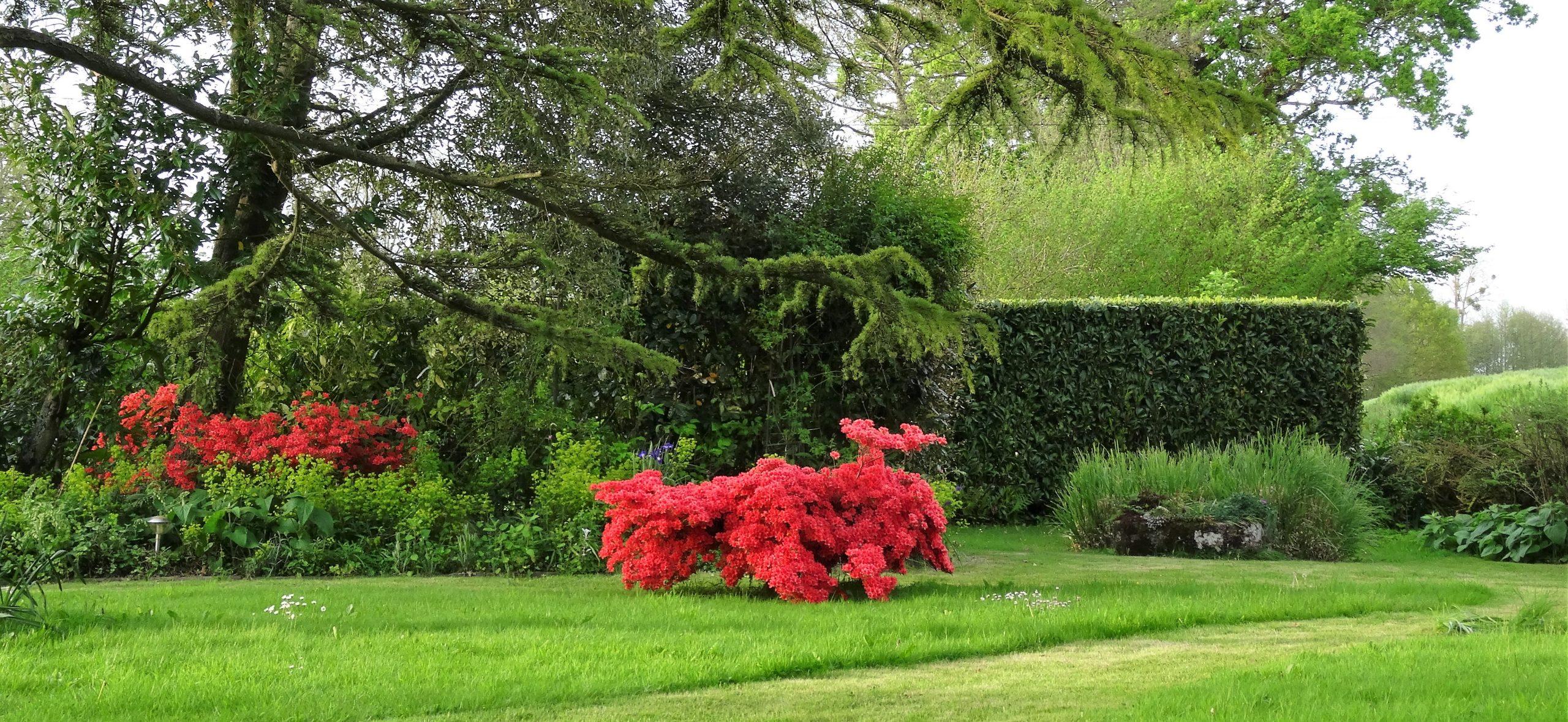 Plantes De Terre De Bruyère : Conseils Pour Bien Réussir Ses ... à Exemple D Aménagement De Jardin