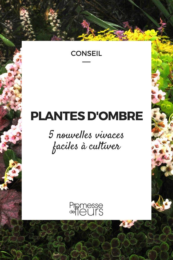 Plantes D'ombre : 5 Nouvelles Vivaces, Faciles À Cultiver ... destiné Plante Jardin Ombre