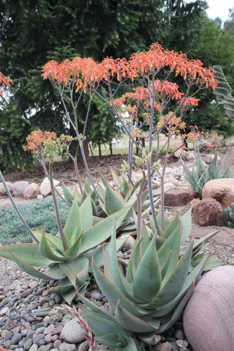 Plantes Et Aménagement Jardin Méditerranéen – 79 Idées ... à Amenagement Jardin Exterieur Mediterraneen