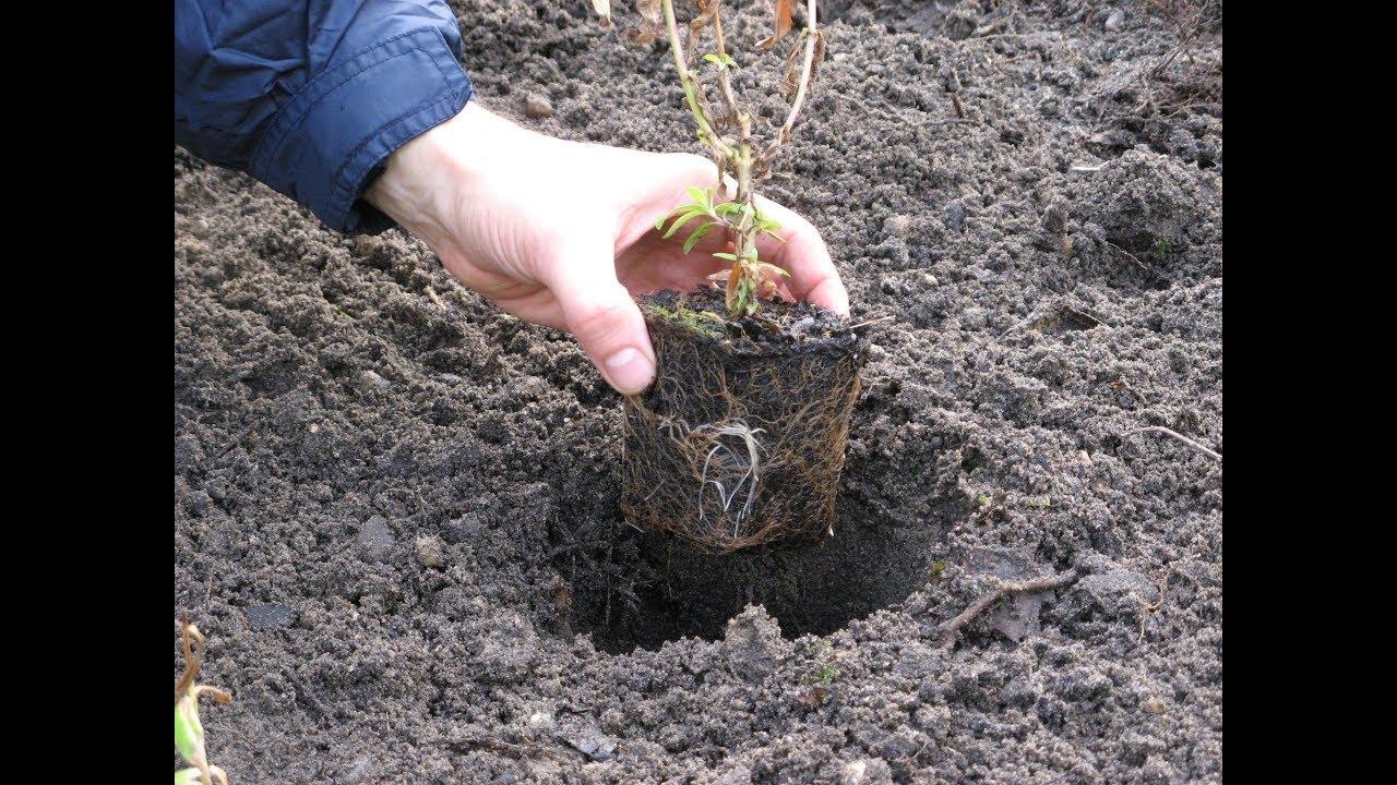 Plantes Pour Massif À L'ombre : Vivaces, Arbustes concernant Arbre Persistant Pour Petit Jardin