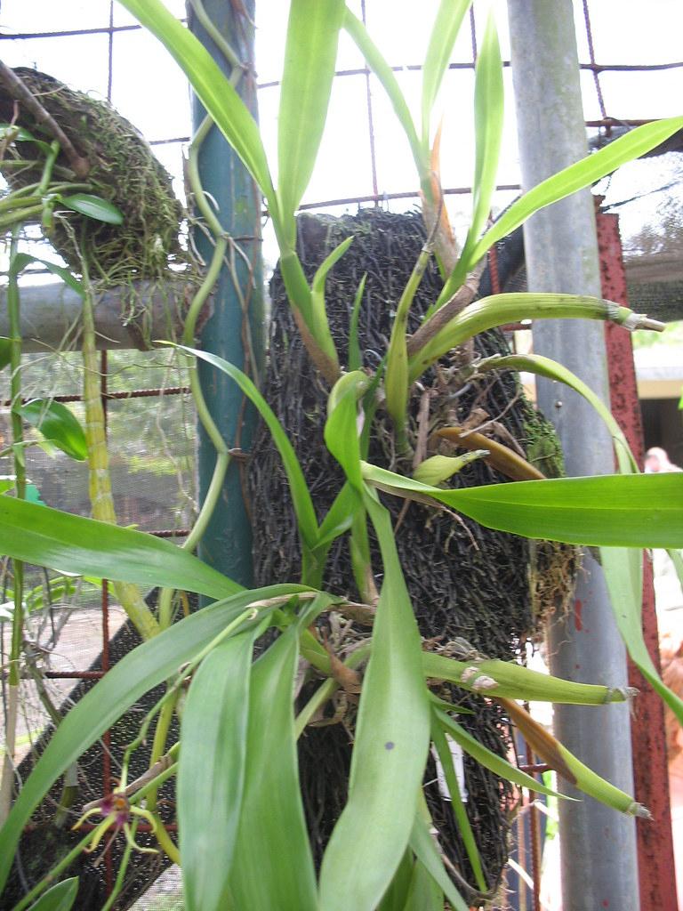 Plantes Sur Écorces Suspendues | [Jardin Botanico, Santo Dom ... serapportantà Ecorces Jardin