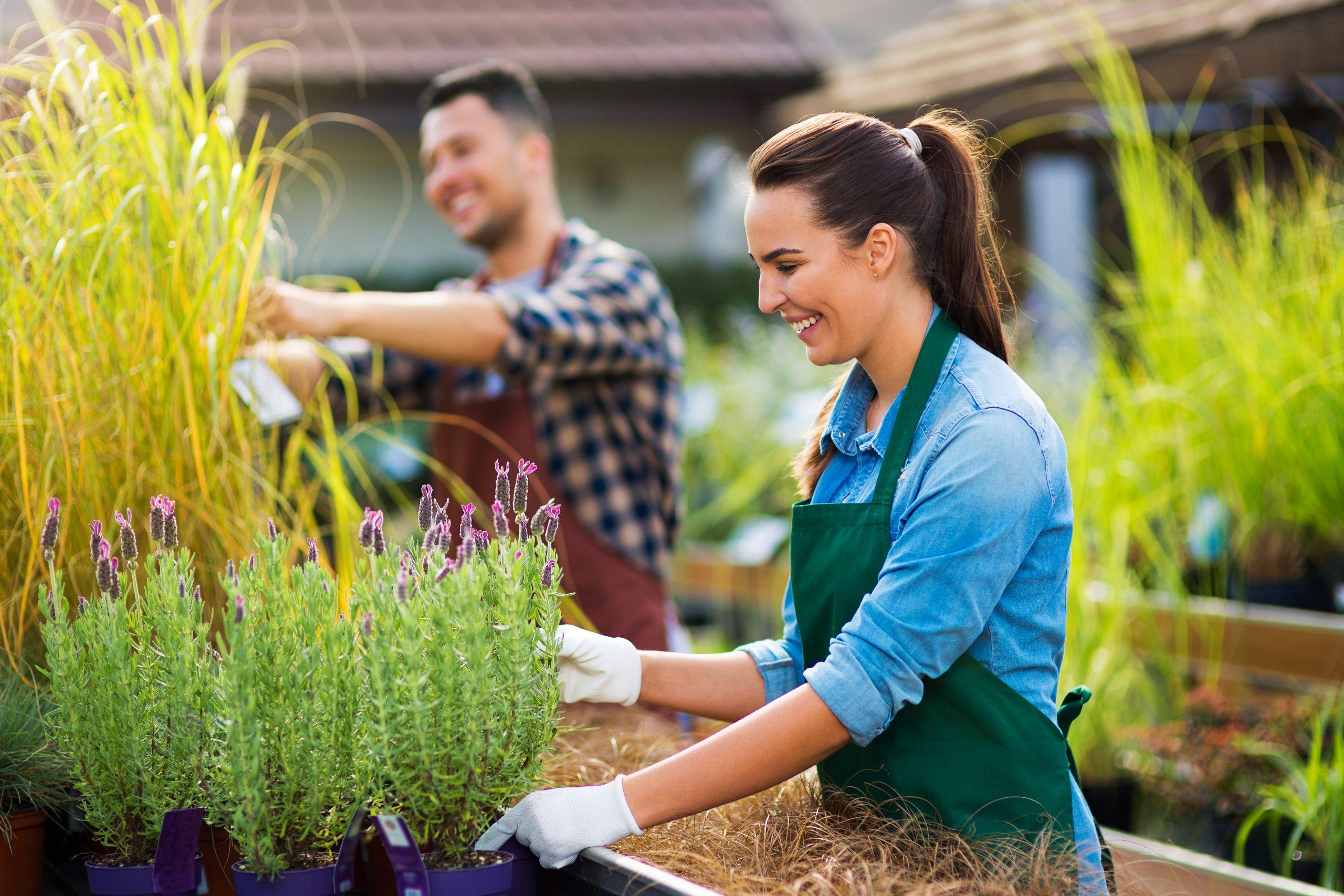 Postulez Pour Un Emploi - Cdjb avec Jardin Botanique Emploi