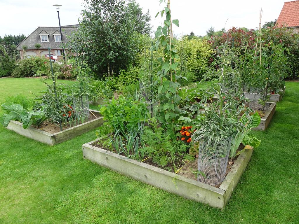 Potager Au Carré (Création, Organisation, Rotation ... concernant Organisation D Un Jardin Potager