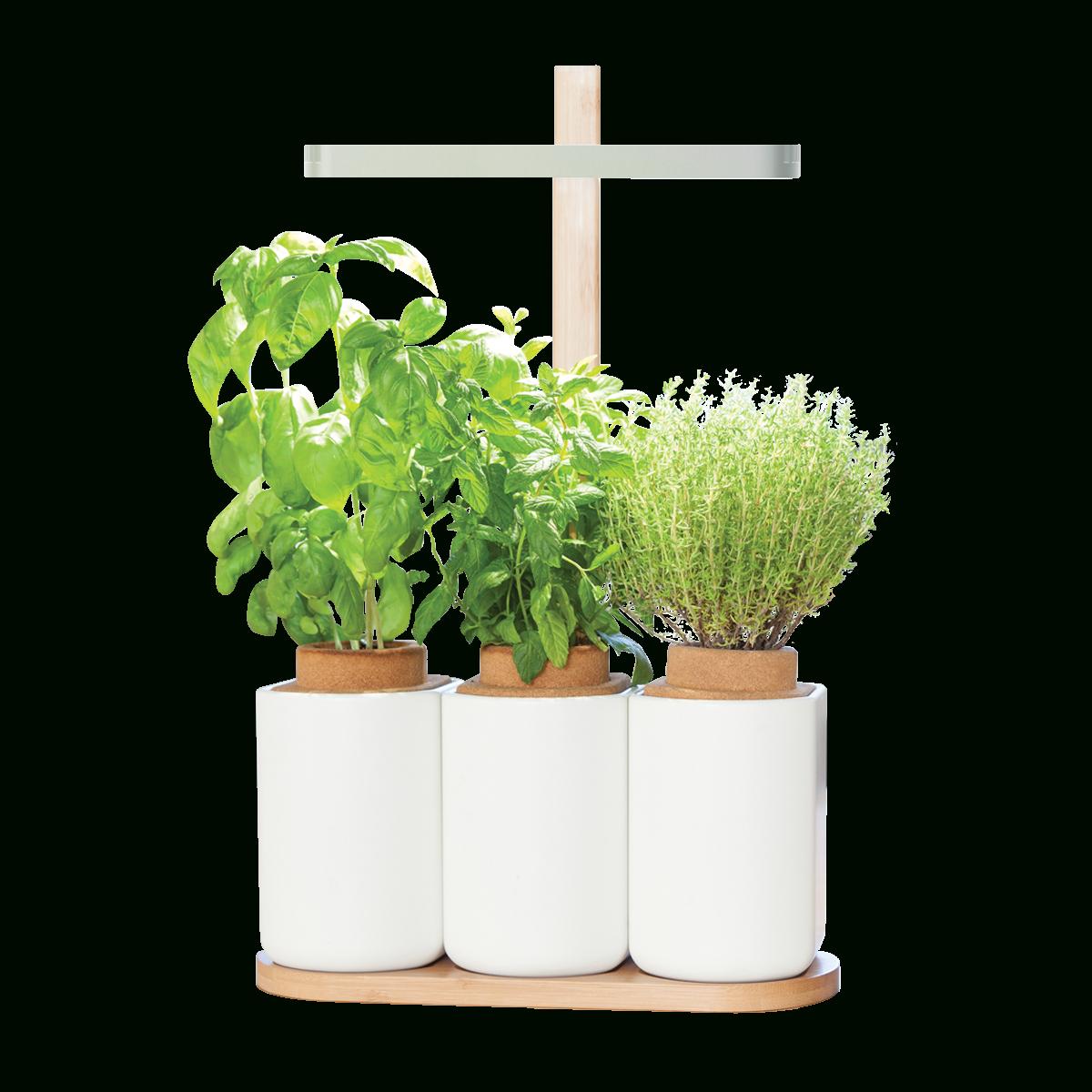 Potager Intelligent Lilo | Noel De La French Tech ... tout Jardin En Kit Pret A Planter