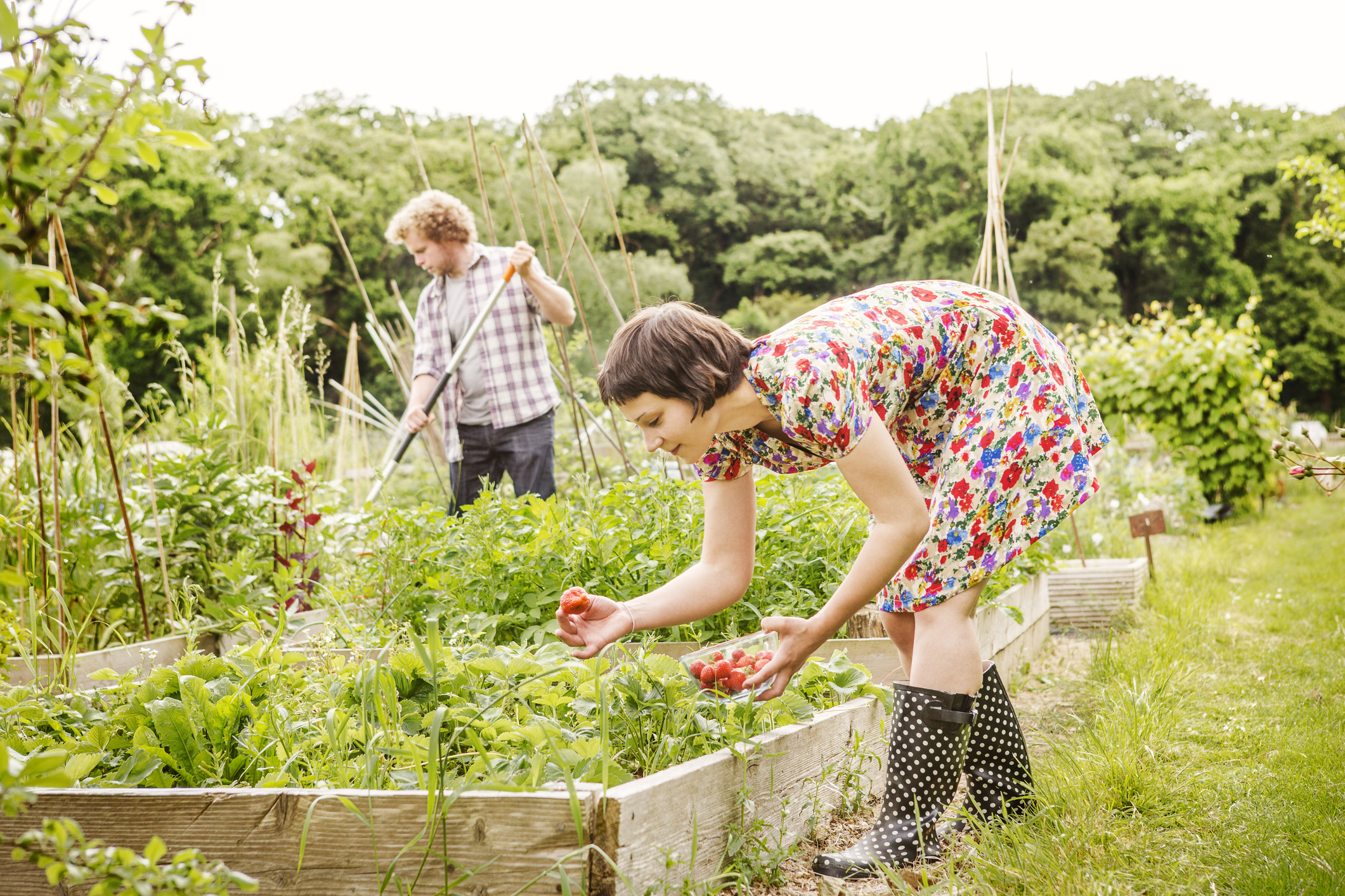 Potager : Les Règles De Base Du Jardinier destiné Jardiner Pour Les Nuls