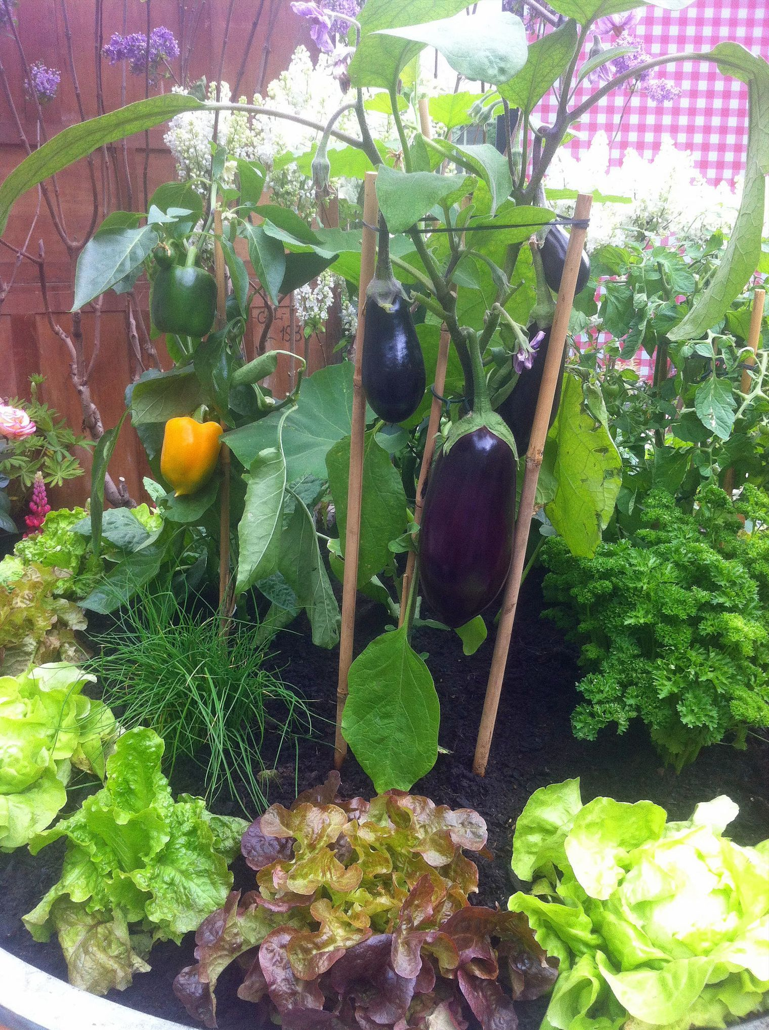 Potager : Plantes, Fruitiers, Aromates Pour Balcon Et ... avec Mini Jardin Balcon