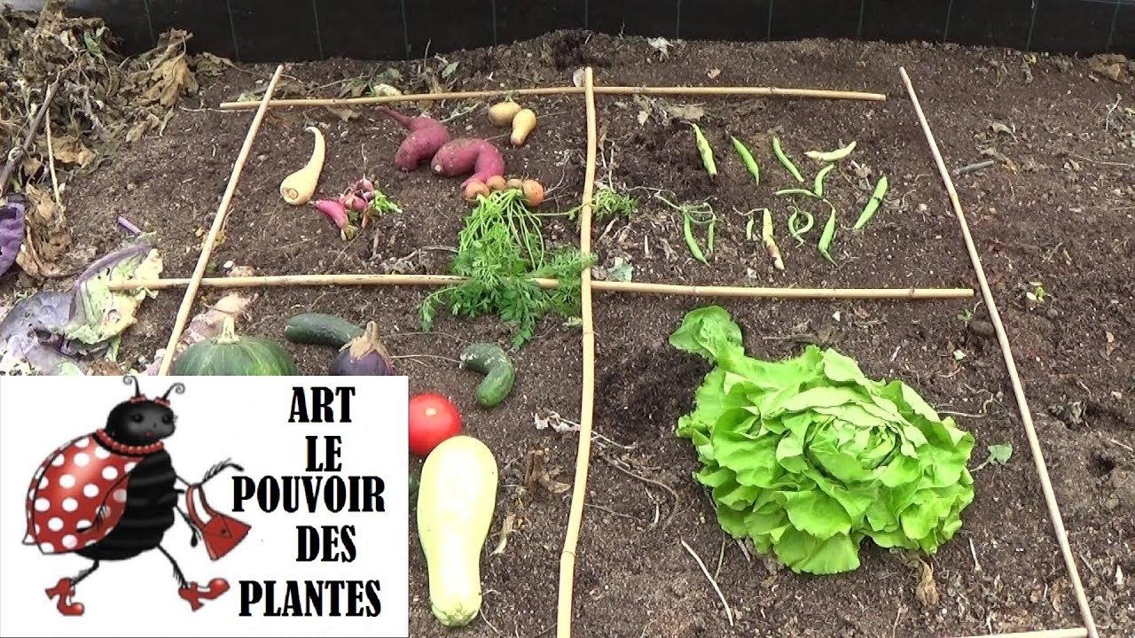 Potager: Rotation Des Cultures Faciles: Conseils Jardinage: Une  Organisation Indispensable avec Organisation D Un Jardin Potager
