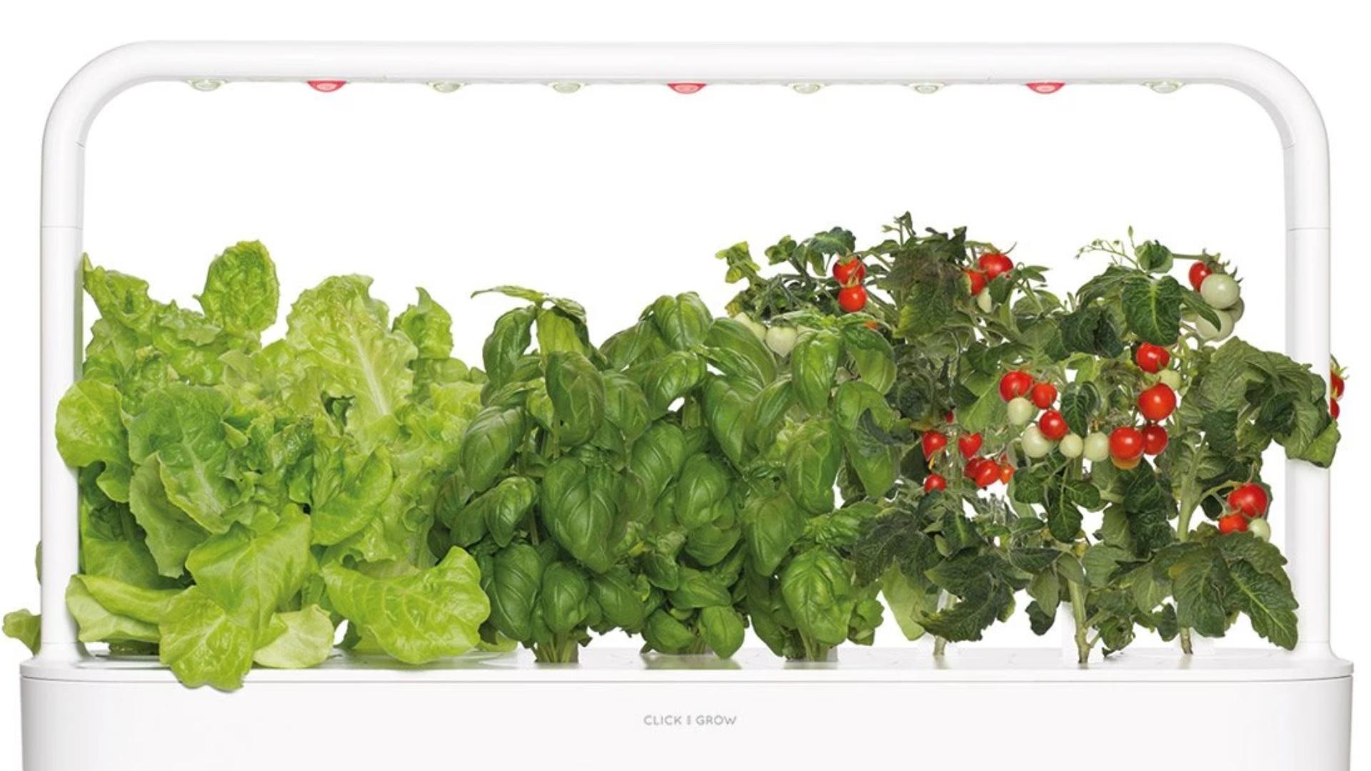 Potagers « Connectés » : Prix, Plants, Application... Quel ... dedans Jardin En Pots Potager