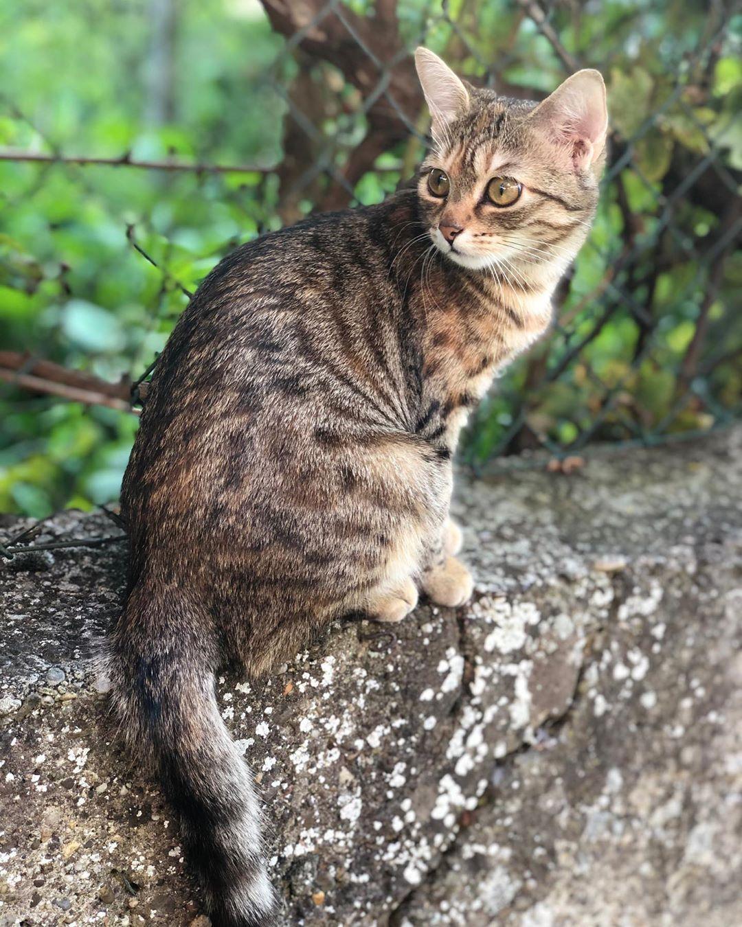 Praline #bebechat#babycat#cat#chat#jardin#picofday#instagram ... encequiconcerne Pralin Jardin