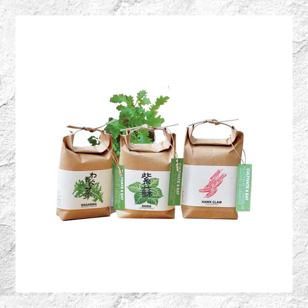 Prêt À Pousser : Aromatiques Japonaises tout Jardin En Kit Pret A Planter