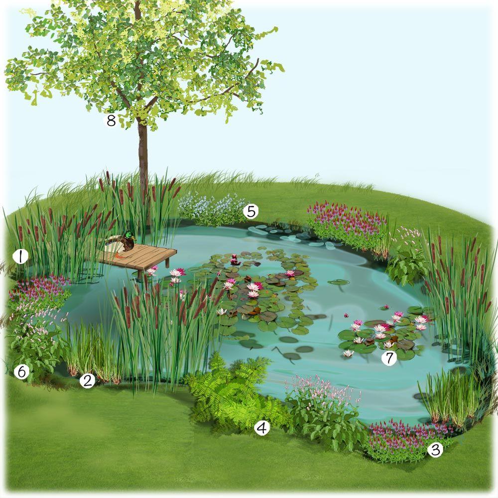 Projet Aménagement Jardin : Bassin Naturel Au Jardin ... serapportantà Amenagement De Bassins De Jardin