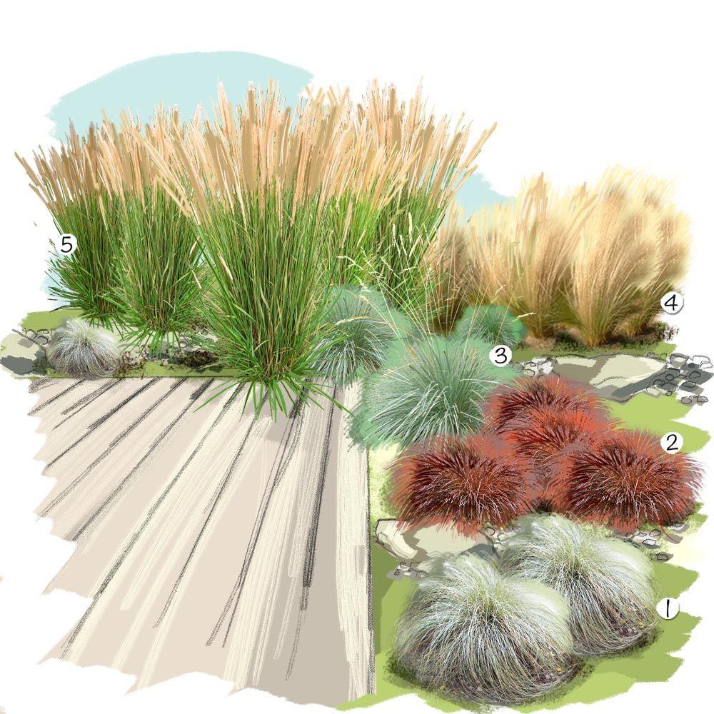Projet Aménagement Jardin : Collection De Graminées ... pour Amenagement Jardin Avec Graminees
