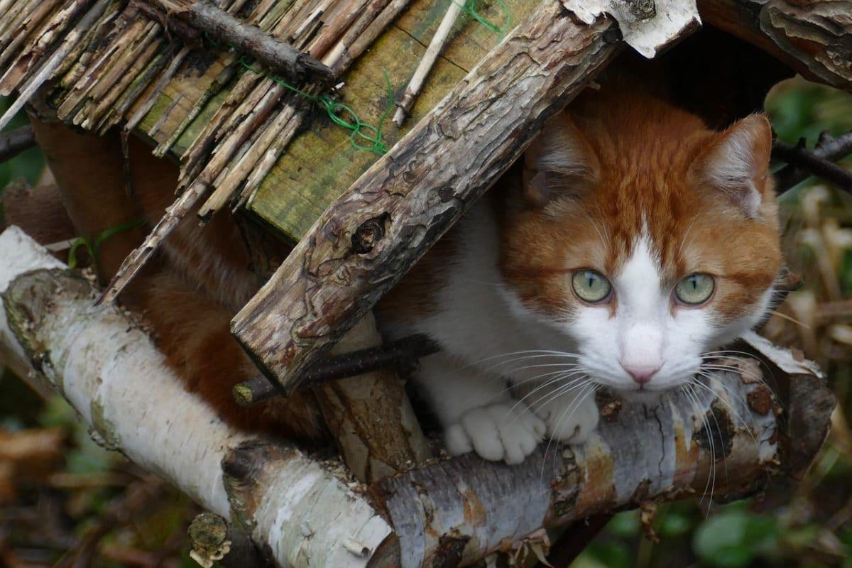 Protéger Les Oiseaux Des Chats - Hello-Birdy dedans Chasser Les Chats Du Jardin