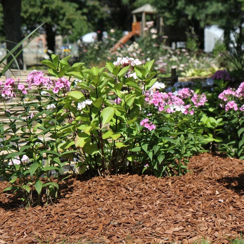 Protéger Ses Plantes Du Froid En Hiver concernant Copeaux De Bois Pour Jardin