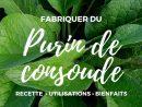Purin De Consoude : Recette, Utilisation Et Bienfaits ... avec Engrais Bio Jardin