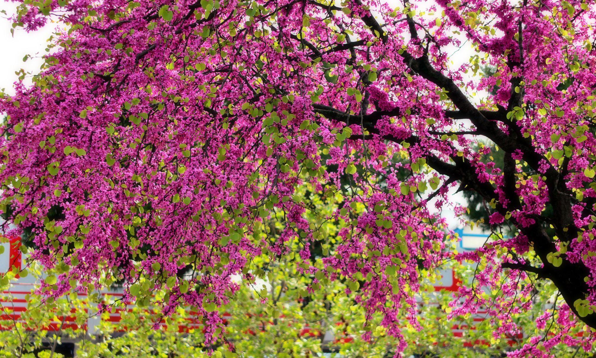 Quel Arbre À Croissance Rapide Pour Faire De L'ombre ? avec Arbre De Jardin A Croissance Rapide