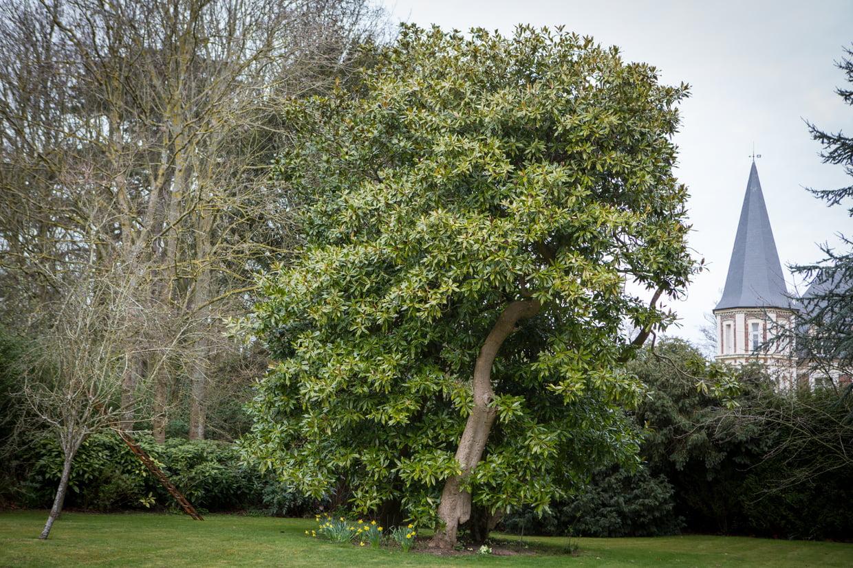 Quel Arbre Original Planter Dans Le Jardin ? pour Arbre Persistant Pour Petit Jardin