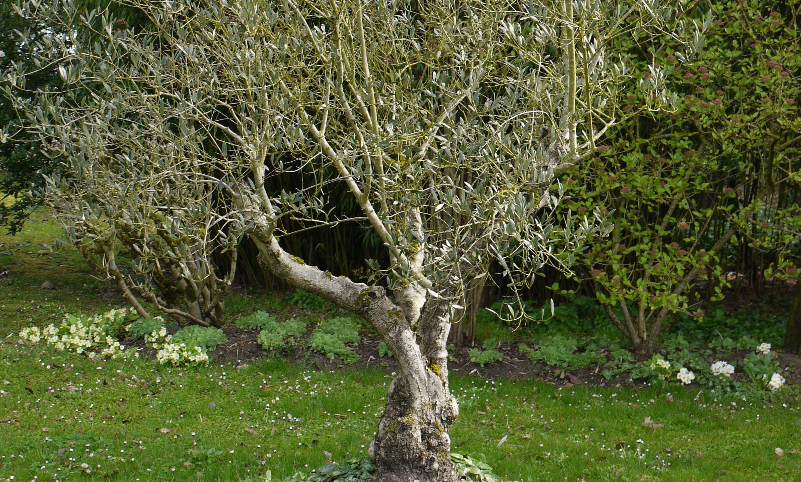 Quel Arbre Pour Mon Jardin ? - M6 Deco.fr intérieur Arbre Pour Petit Jardin