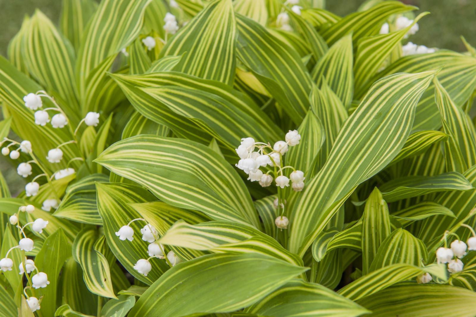 Quelles Sont Les Plantes Toxiques Du Jardin à Arbustes Decoration Jardin
