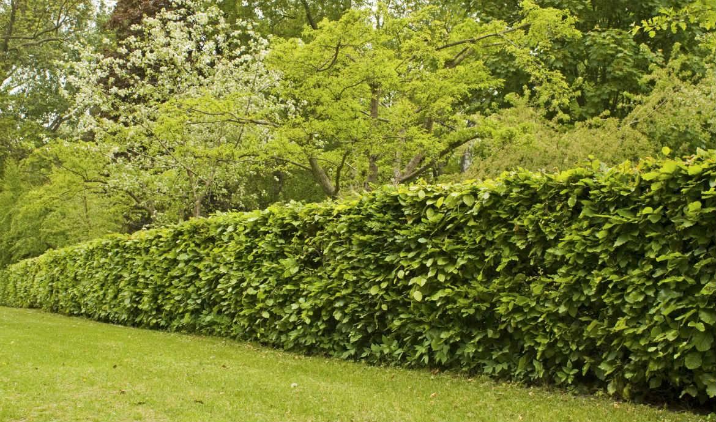Quels Arbres Planter Pour Avoir Une Belle Clôture ? - Choix ... concernant Buisson Pour Jardin