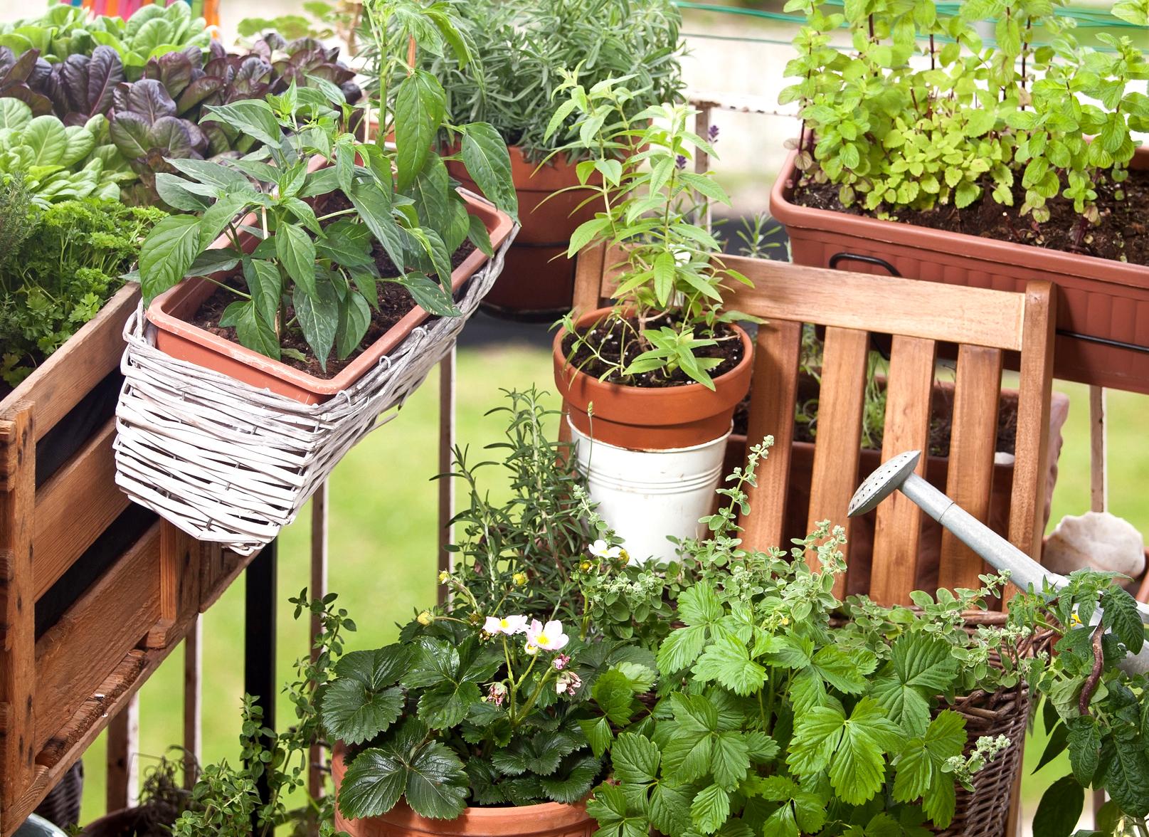 Quels Légumes Faire Pousser Sur Son Balcon ? La Ferme De ... à Faire Un Jardin Sur Son Balcon