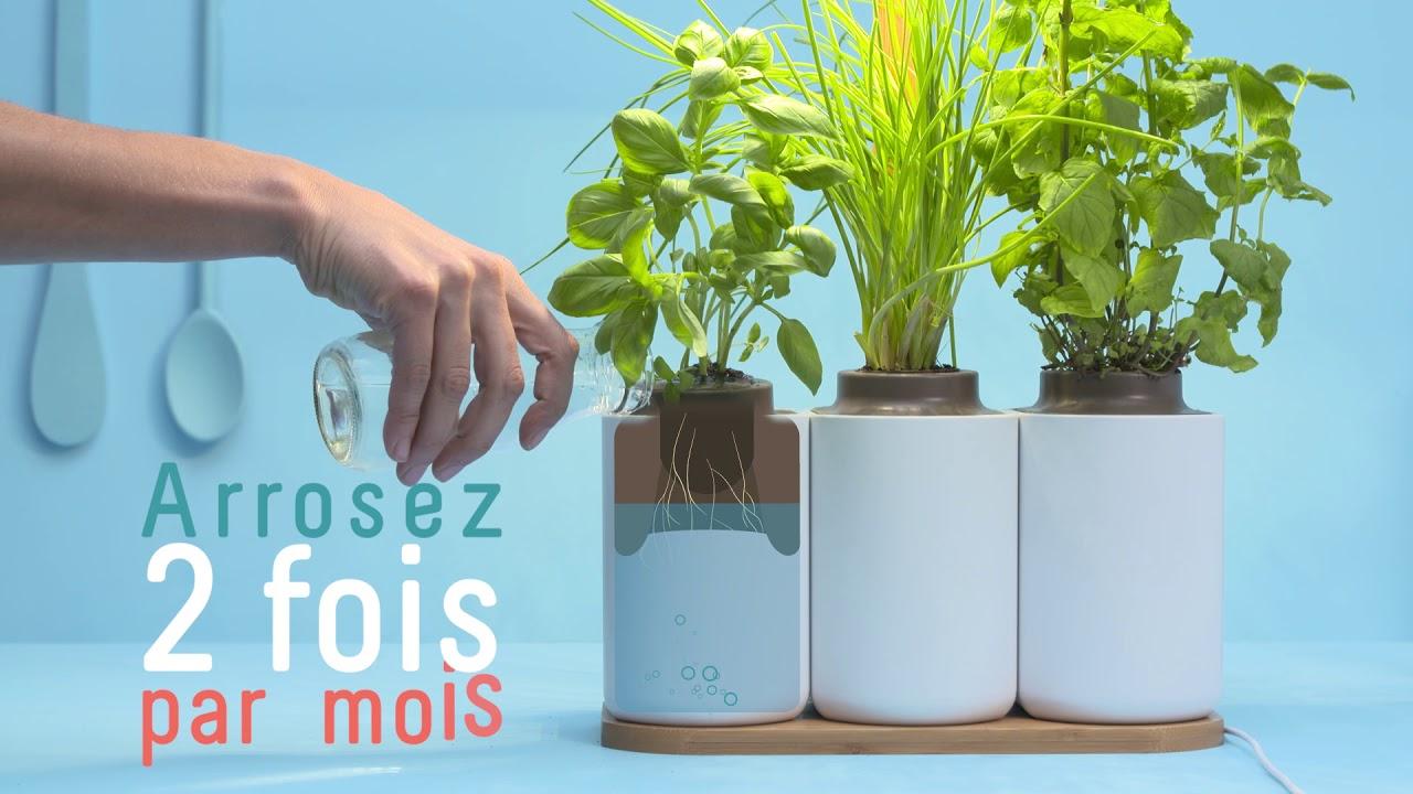 Ready To Push - Lilo Mini Indoor Vegetable Garden Prêt À ... avec Jardin En Kit Pret A Planter