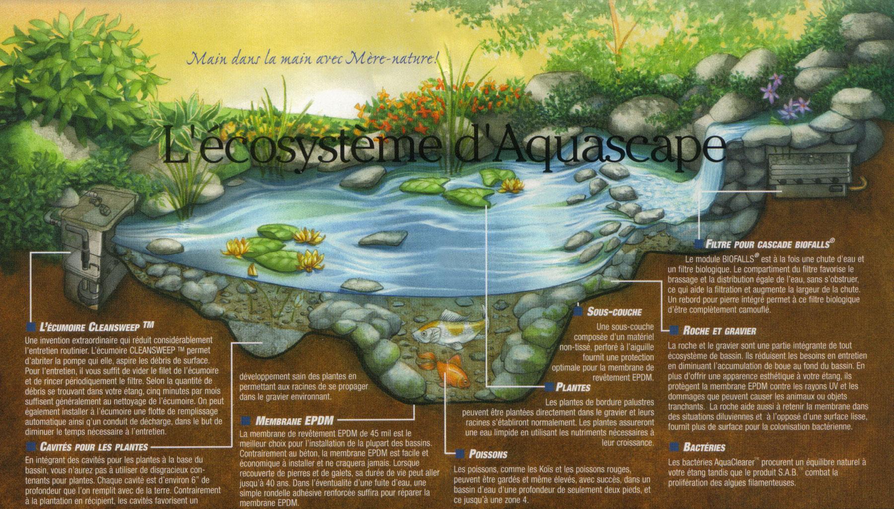 Réalisations - Jardins Aquadesign destiné Prix D Un Bassin De Jardin