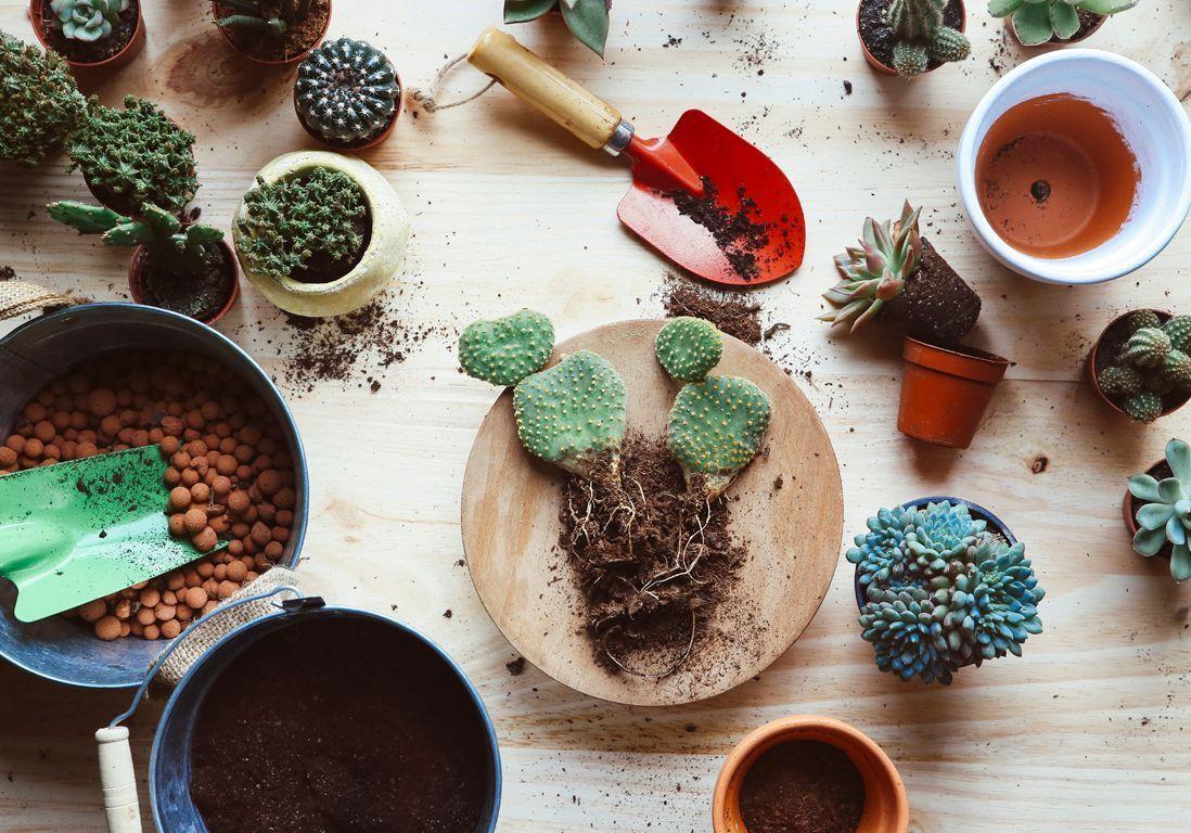 Rempotage : Comment Rempoter Une Plante ? - Elle Décoration à Le Jardin Pour Les Nuls