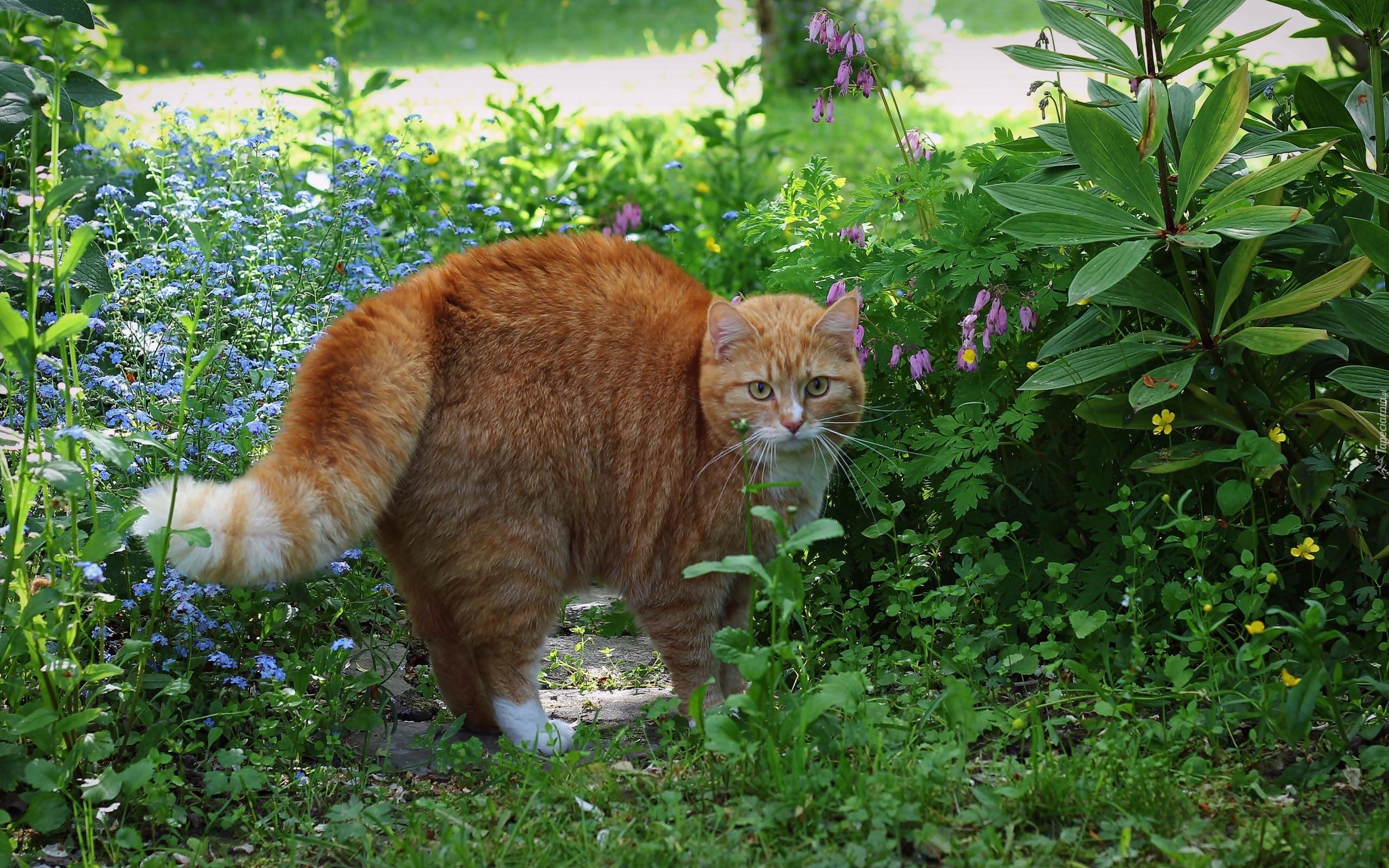 Répulsif Chat : Comment Éloigner Les Chats ? – Comment Maison intérieur Repulsif Chat Jardin