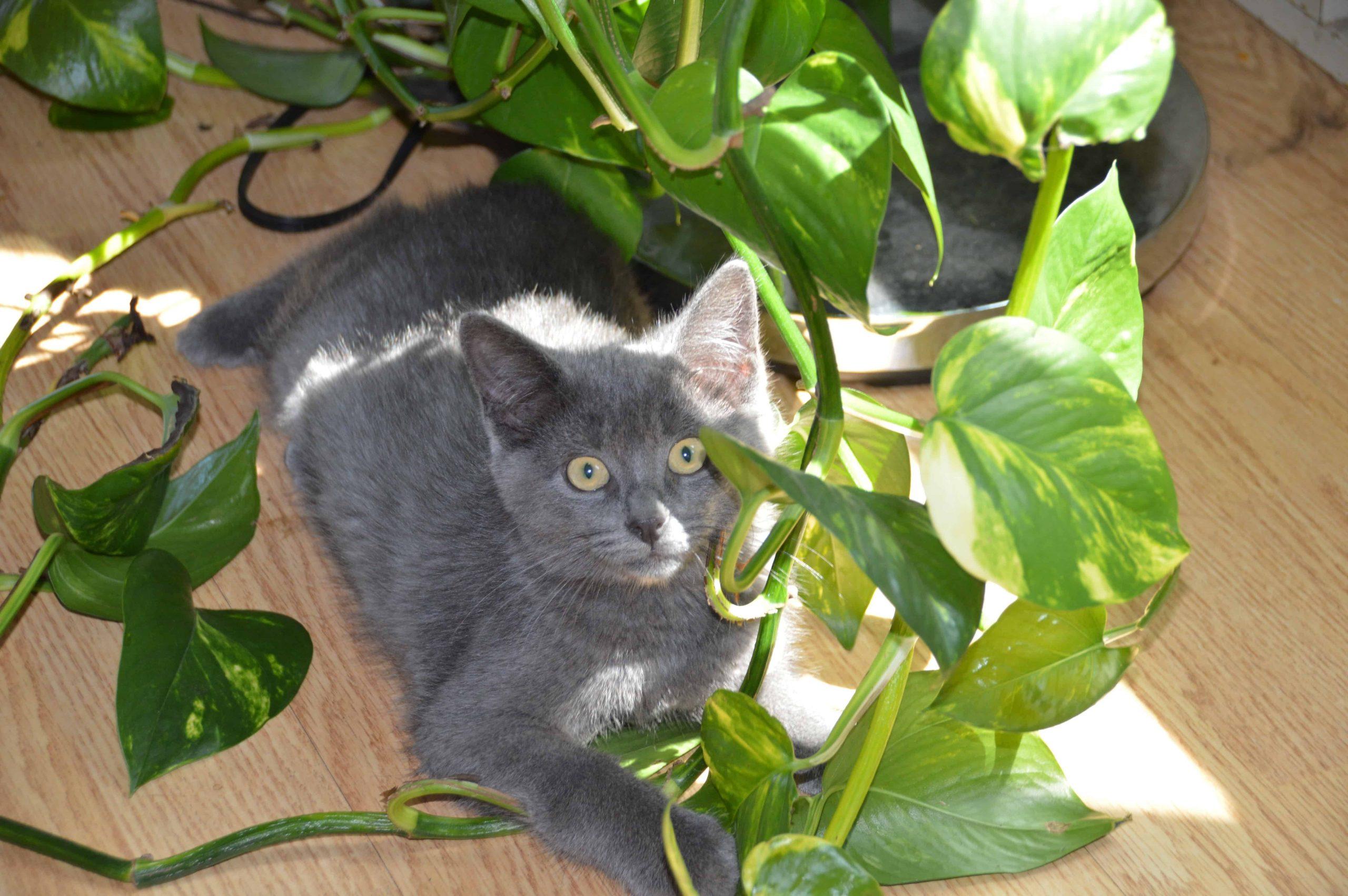 Répulsif Naturel Pour Les Chats (Pour Sauver Vos Meubles ... pour Repulsif Chat Jardin Naturel