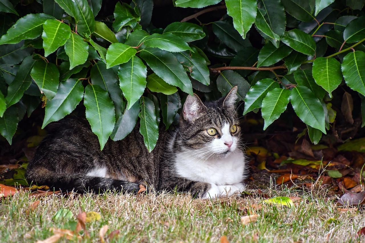 Répulsif Pour Chat: Comment L'éloigner De Votre Jardin ... serapportantà Repulsif Chat Jardin